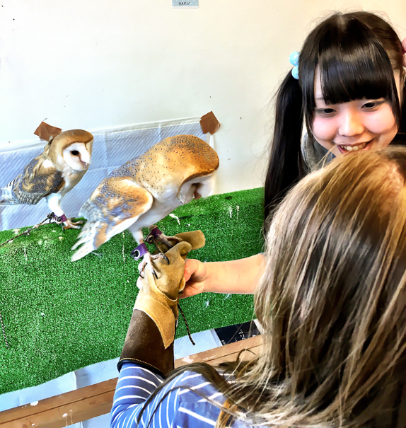Owl Cafe Tokyo Japan with kids