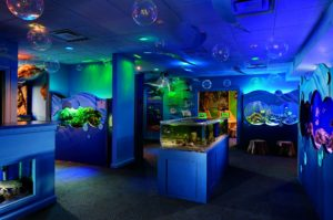 Ritz Kids Aquarium - best Florida gulf coast hotels