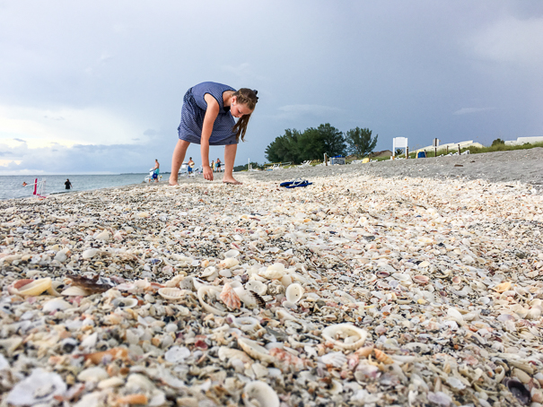Shelling on Captiva Island with kids
