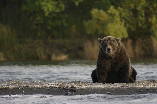 Bear at Katmai National Park. Credit: NPS