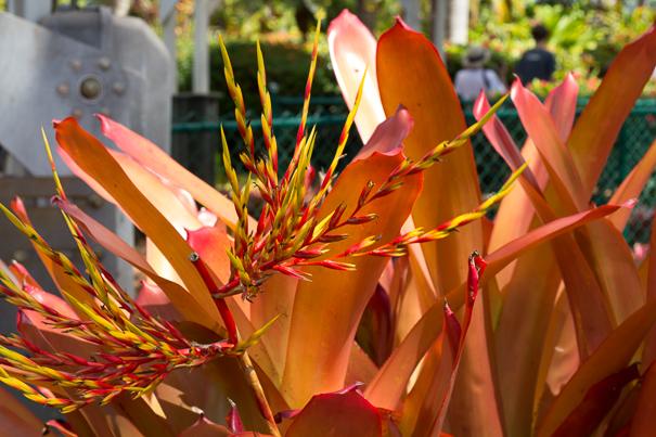 Gardens at the Dole Plantation Oahu Hawaii