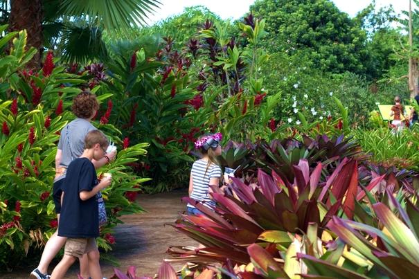 Dole Plantation Garden Tour