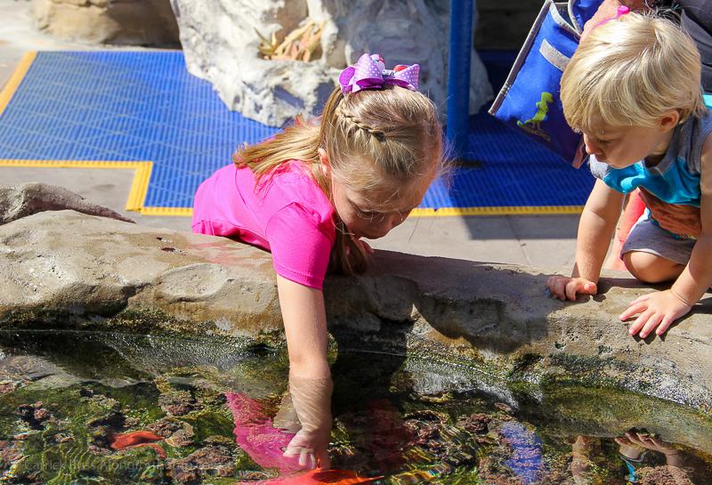 La Jolla California things to do - The Birch Aquarium