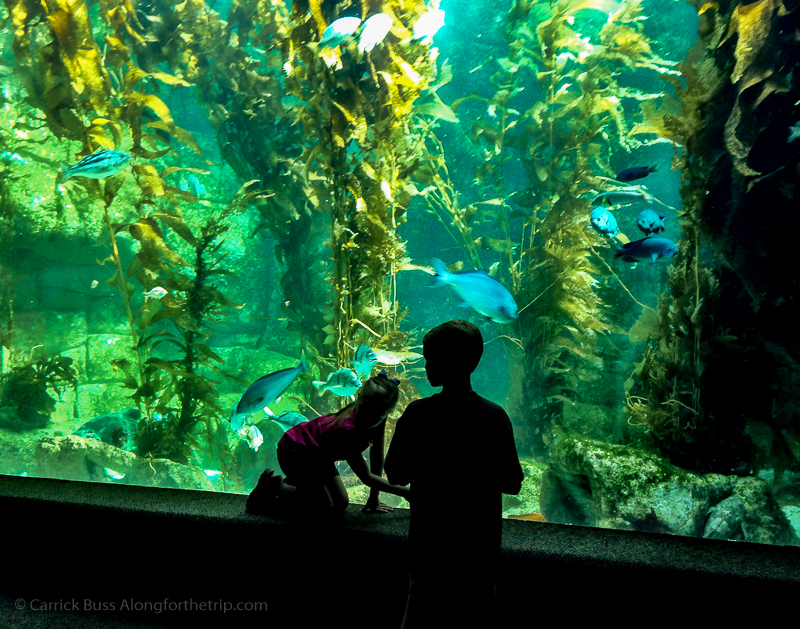 The Birch Aquarium - San Diego family attractions