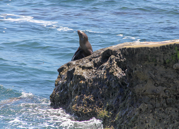 La Jolla Cove in San Diego with kids
