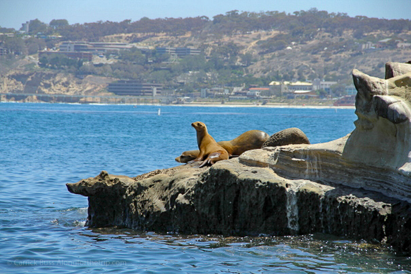 Visit the Sea Lions - San Diego best things to do