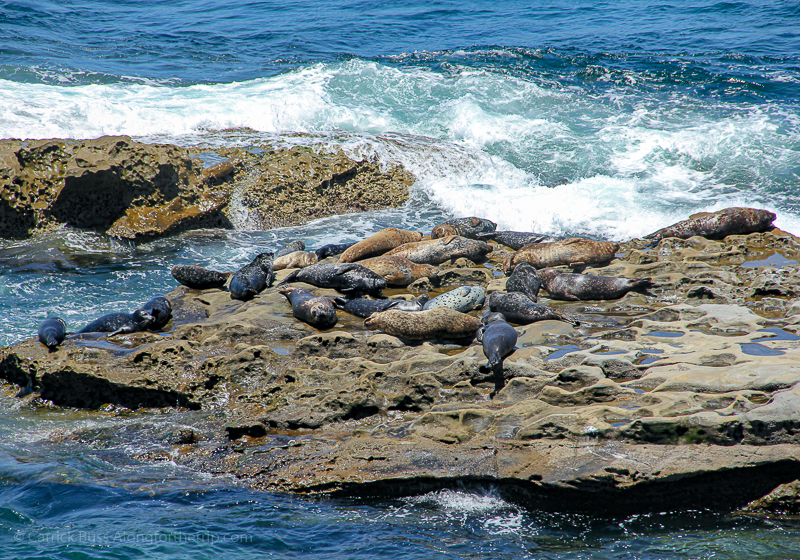La Jolla Cove - family things to do in San Diego