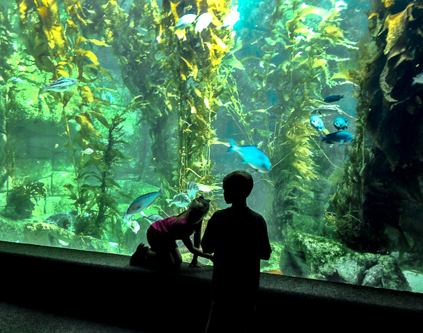 Birch Aquarium - Things to do in San Diego with kids