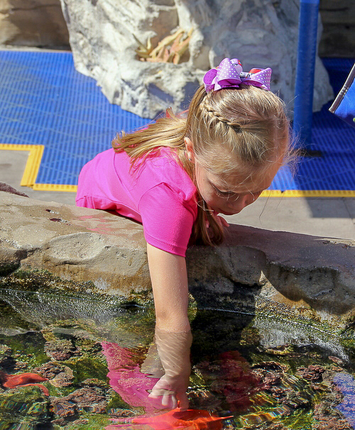 San Diego with kids at the Birch Aquarium