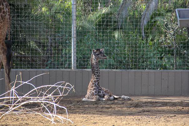San Diego with kids - San Diego Zoo
