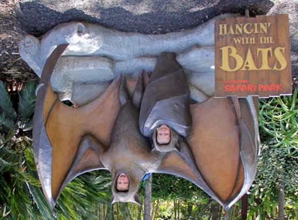 San Diego Zoo Safari Park - best things to do in San Diego