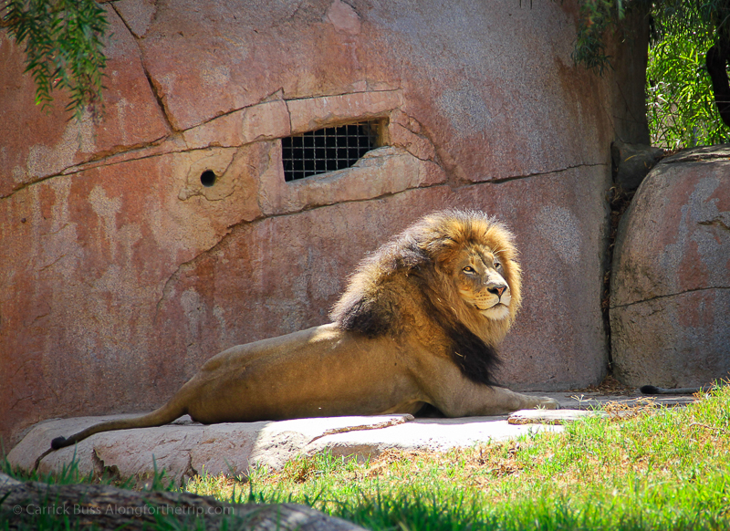 Places to go in San Diego - San Diego Zoo Safari Park
