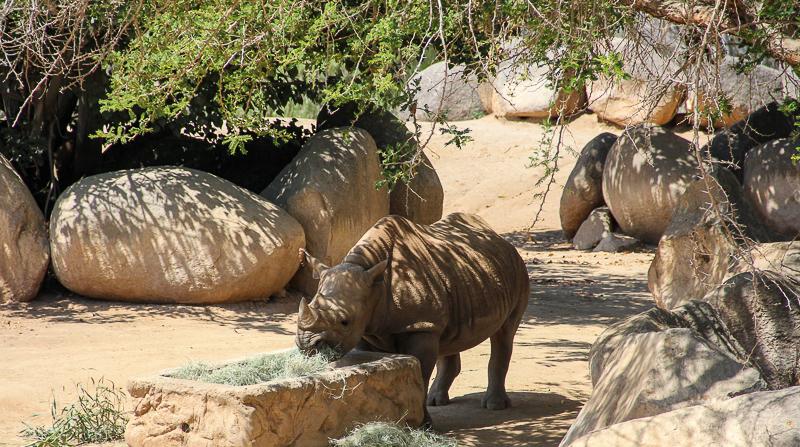 Things to do in San Diego area - San Diego Zoo Safari Park