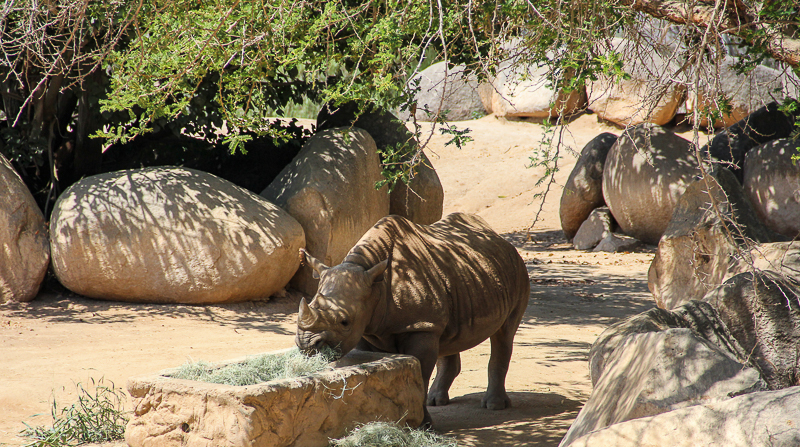 Things to do in San Diego area - San Diego Zoo Safari Park