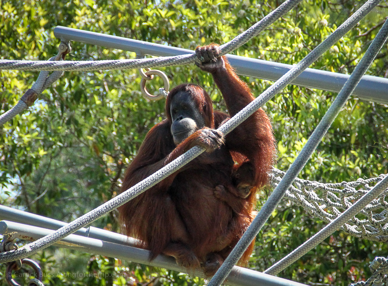 Things you have to do in San Diego - visit the zoo.