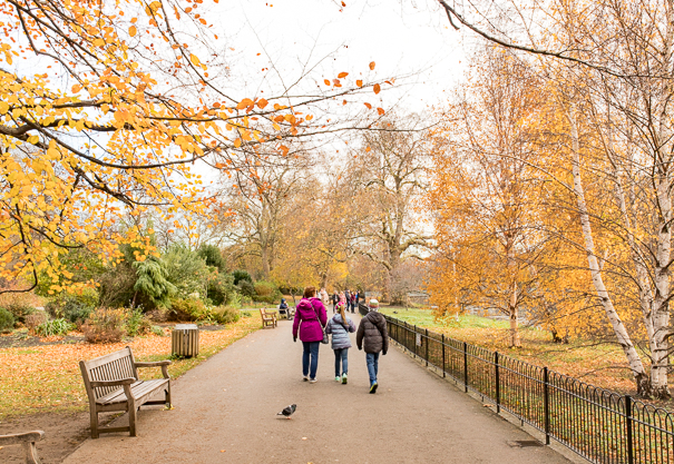 London sightseeing for kids at St. James's Park near Buckingham Palace.