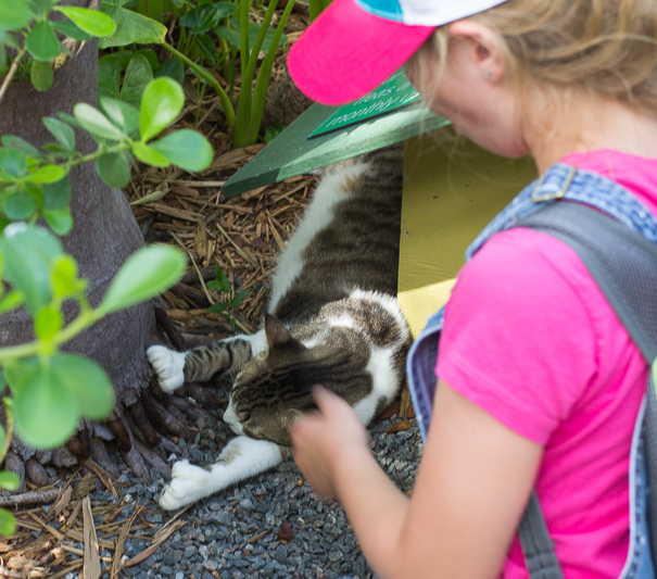 pet the 6 toed cats at Hemingway House - Key West kids activities