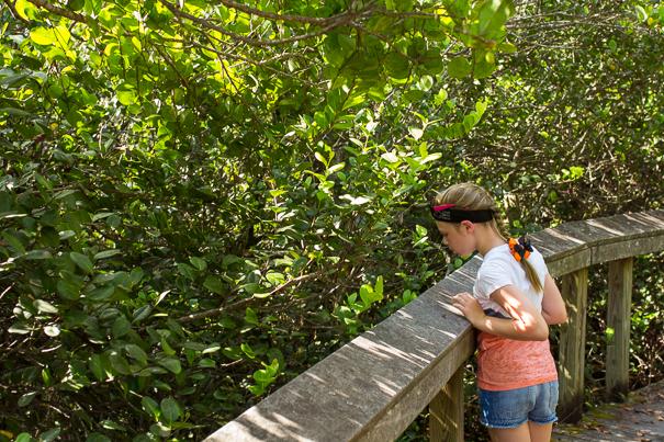 Everglades National Park - Shark Valley