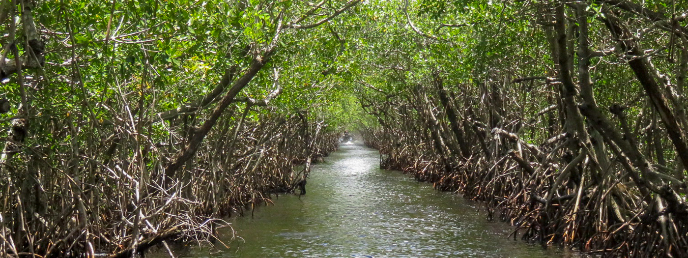 Everglades National Park: Visiting the Everglades with Kids