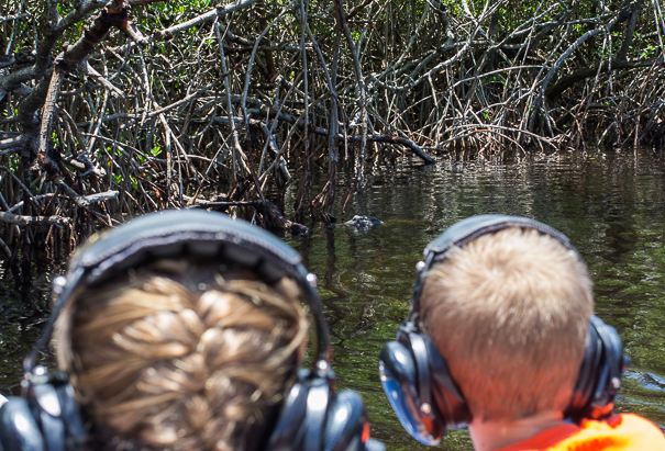 Airboat rides Everglades National Park