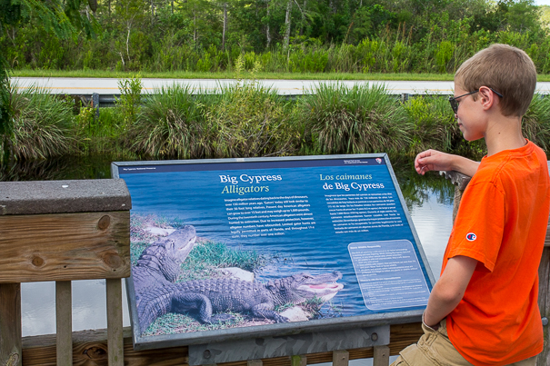 Big Cypress National Preserve with kids