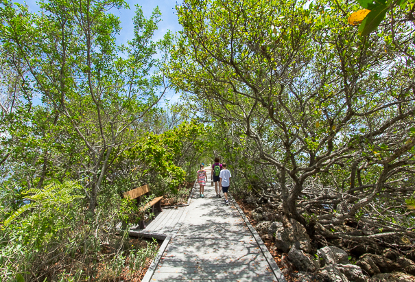 Hiking through Biscayne National Park with kids