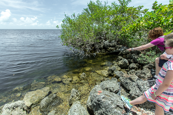 Spotting fish - things to do in Biscayne Bay