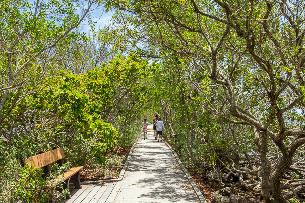 Hiking through the mangroves at Biscayne National Park