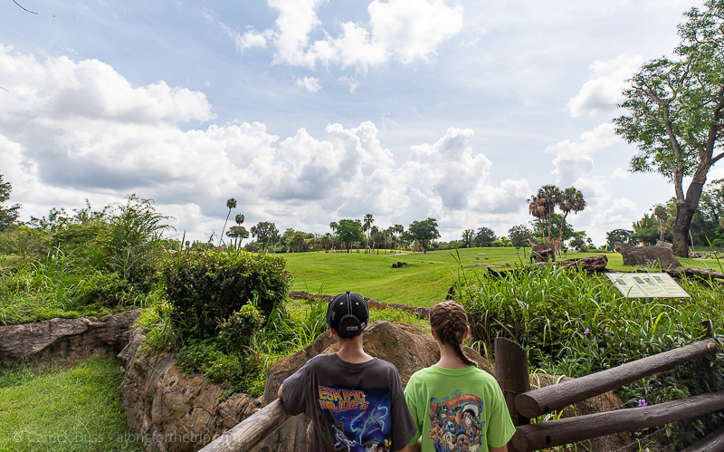 Tampa Bay with kids at Busch Gardens Tampa