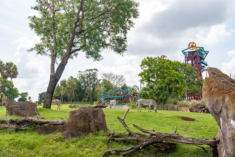 Busch Gardens Tampa - Tampa Bay with kids