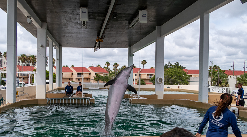 Finding the best in Tampa with kids at the Clearwater Marine Aquarium dolphin show.