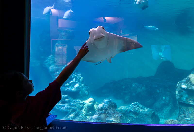 Friendly stingrays at the Clearwater Marine Aquarium