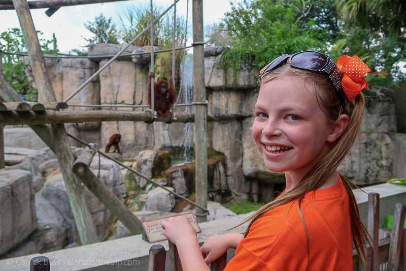 Watching the baby orangutans at ZooTampa with the kids.