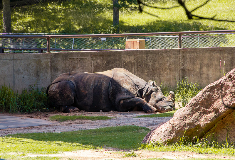 Rhino encounter at the OKC Zoo - things to do for families in OKC