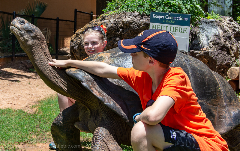 Galapagos tortoise encounter - best things to do in OKC with kids