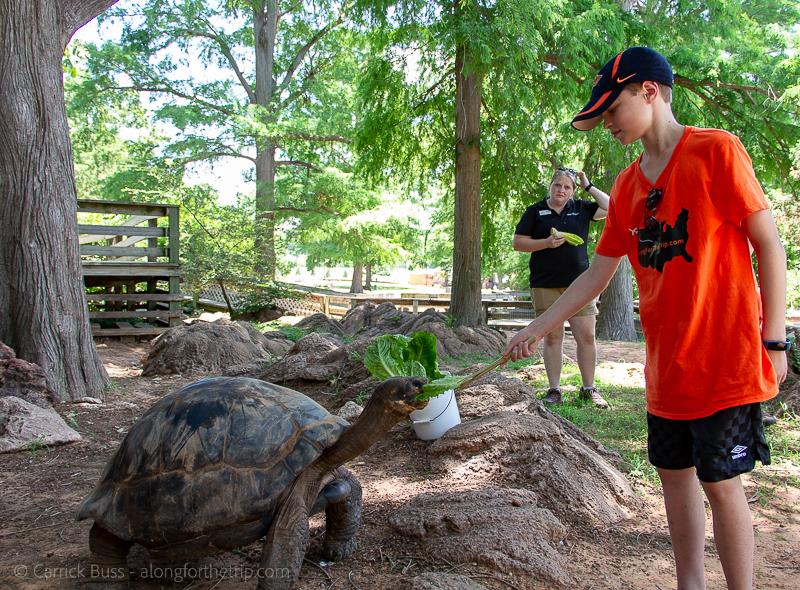 Galapagos tortoise encounter -OKC activities at the Zoo
