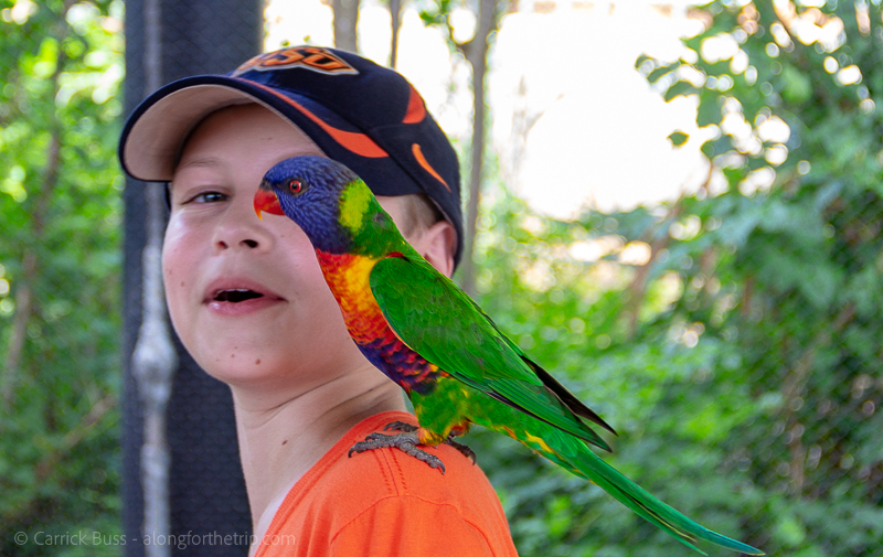 Oklahoma City with kids - feeding the lorikeets at the zoo