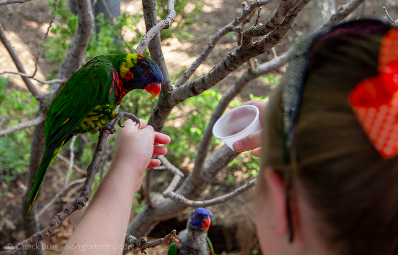 Feeding the Lorikeets at the OKC Zoo - cheap things to do in OKC