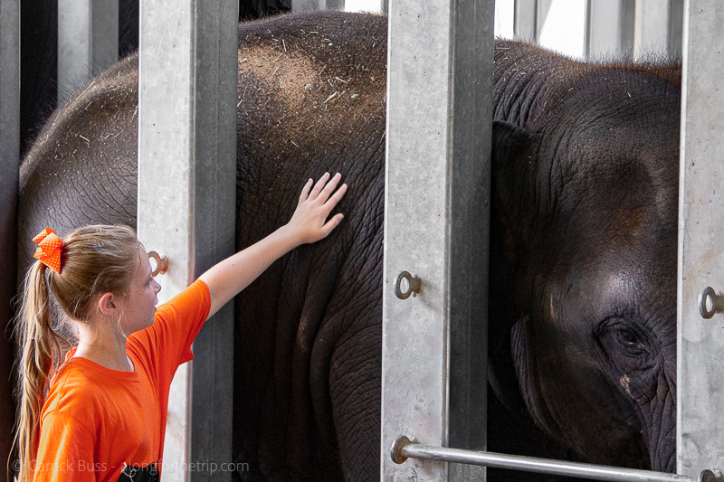 Elephant encounter at the Oklahoma City Zoo - activities in OKC