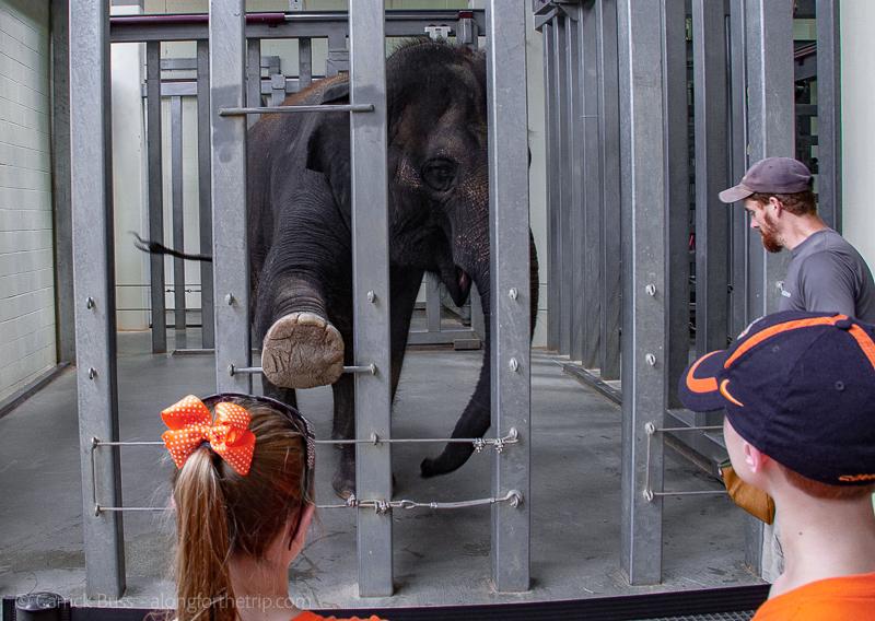 Elephant encounter at the Oklahoma City Zoo with kids