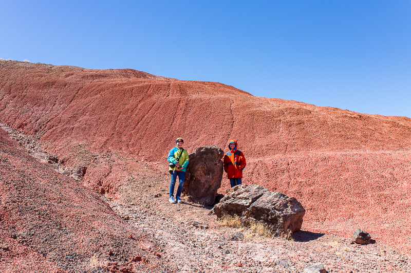 Petrified logs in Arizona's Painted Desert