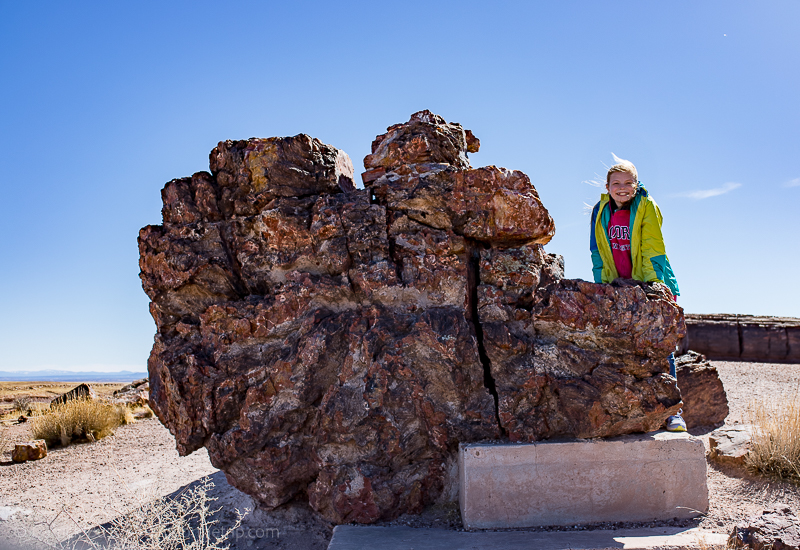 Giant logs at the Rainbow Forest Museum in Petrified Forest National Park