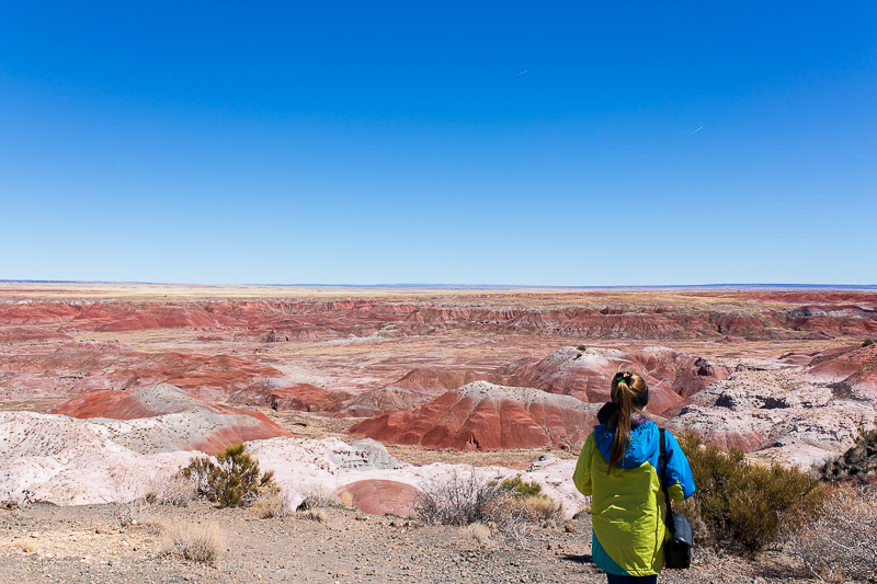 Vistas in Petrified Forest National Park