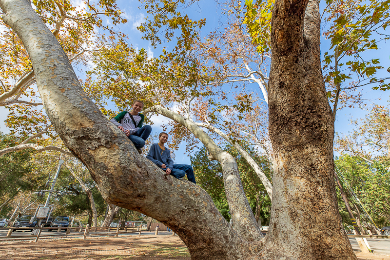 Irvine Regional Park - best things to do in Irvine