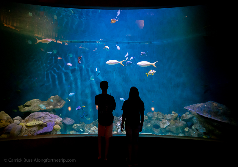 The National Mississippi River Museum & Aquarium - things to do in Dubuque Iowa