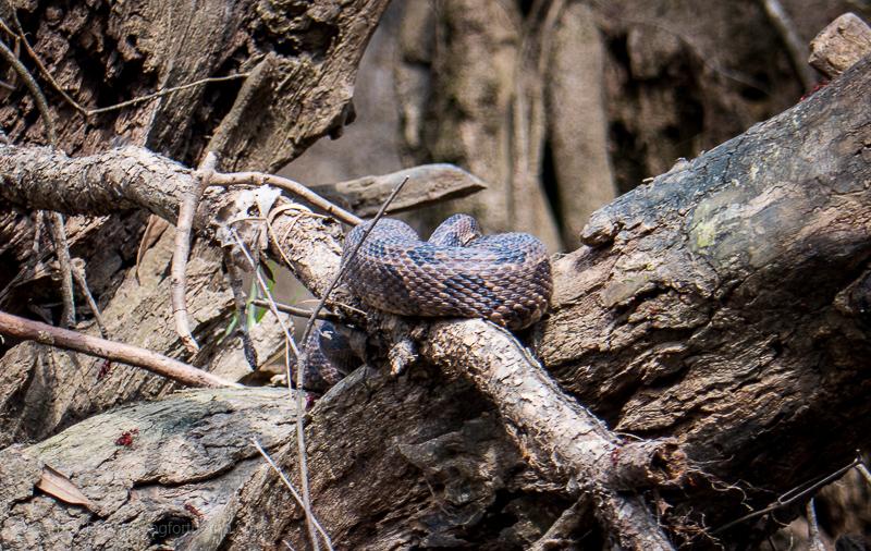 Congaree National Park animals