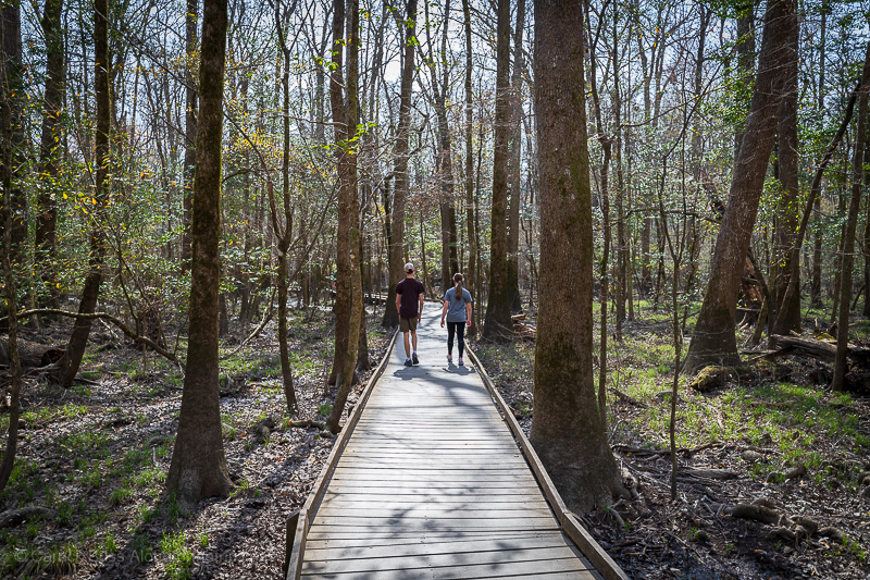 Congaree National Park trails