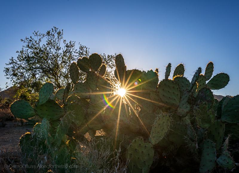 Hiking Saguaro National Park