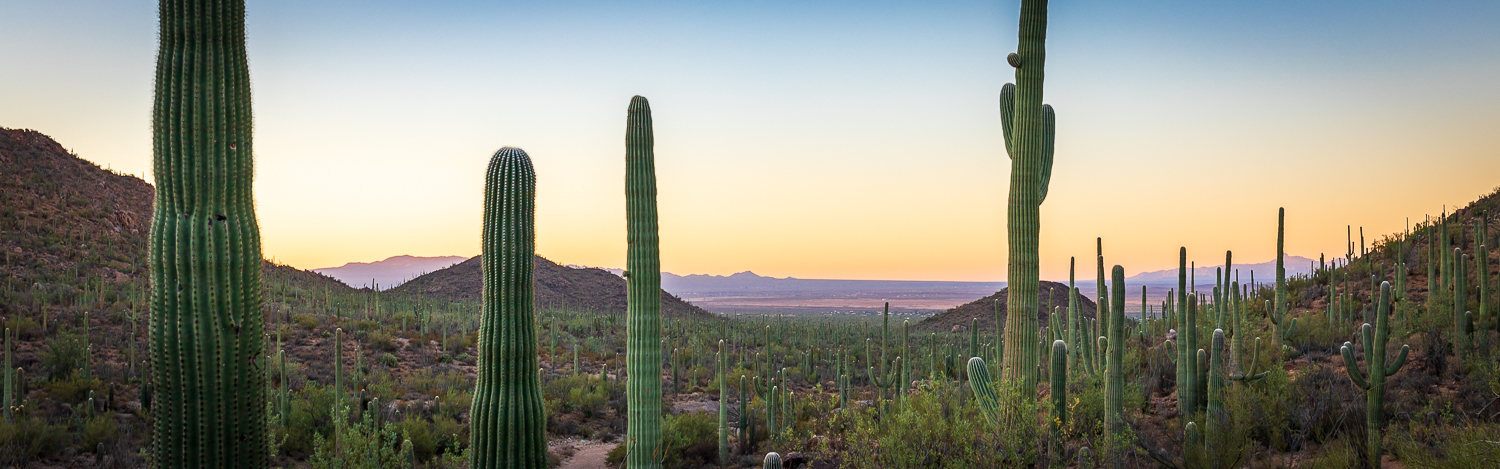 Best Things to do in Saguaro National Park
