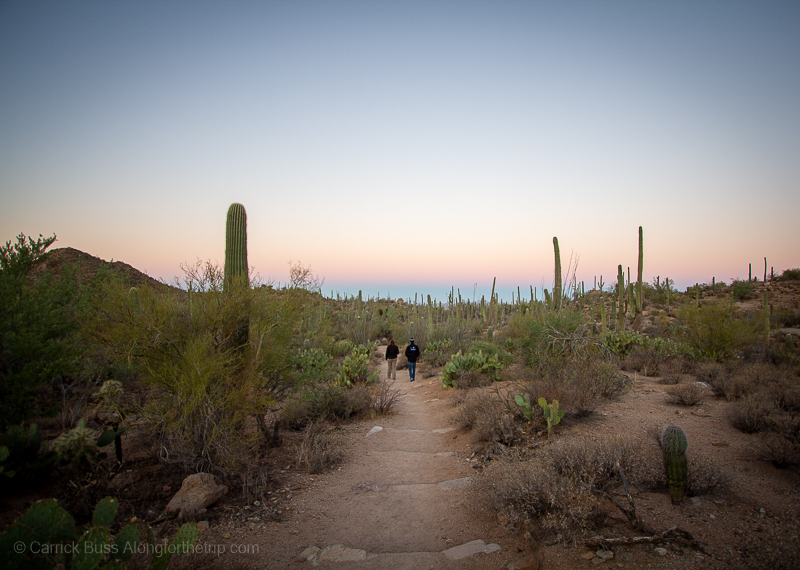 Saguaro National Park Tucson AZ